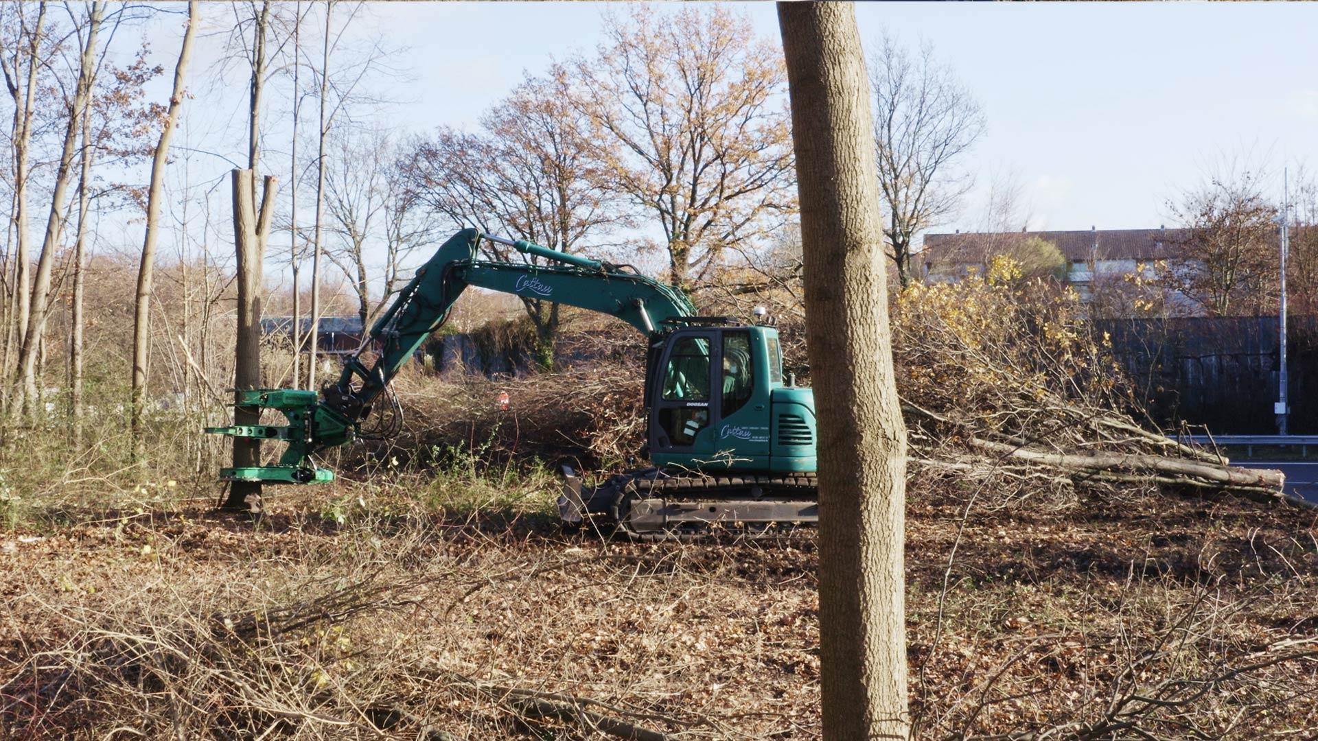 Baumfällung Wedemark